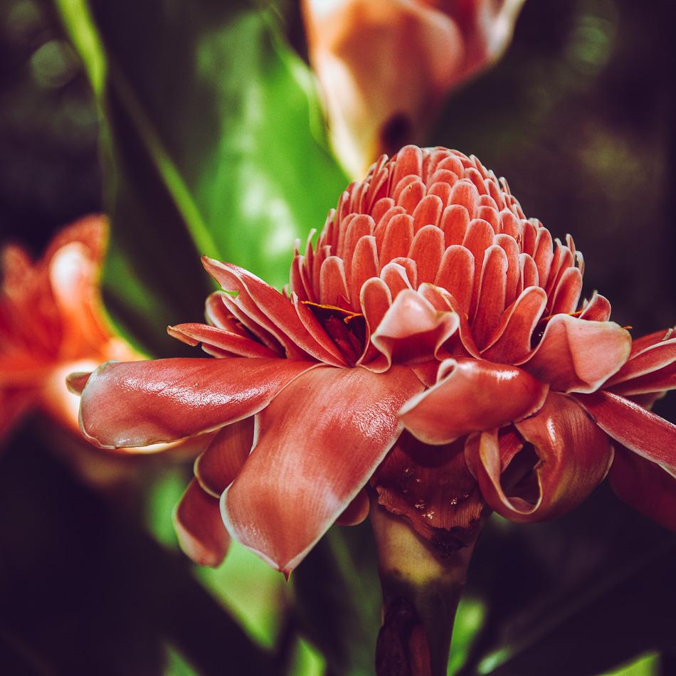 Singapore Botanic Garden_HR_02-5