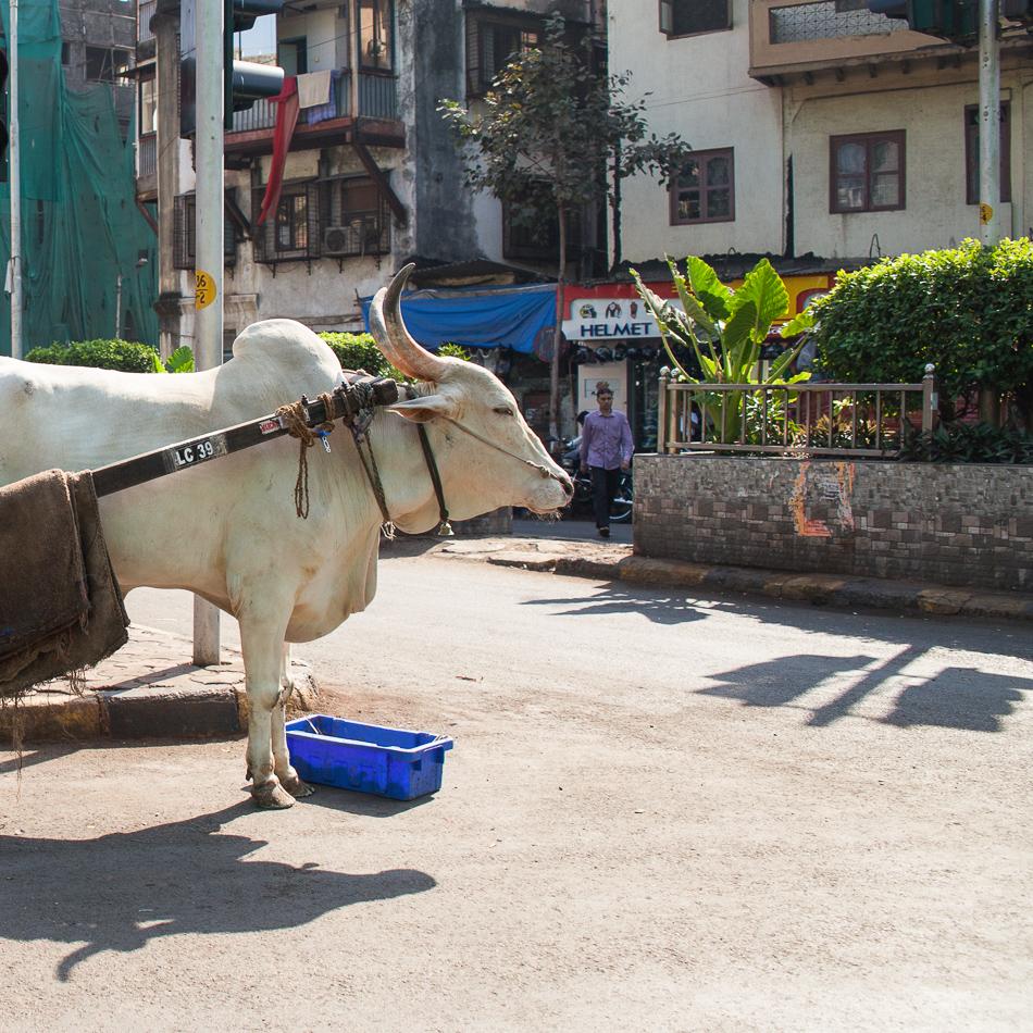 02_Mumbai_011--2