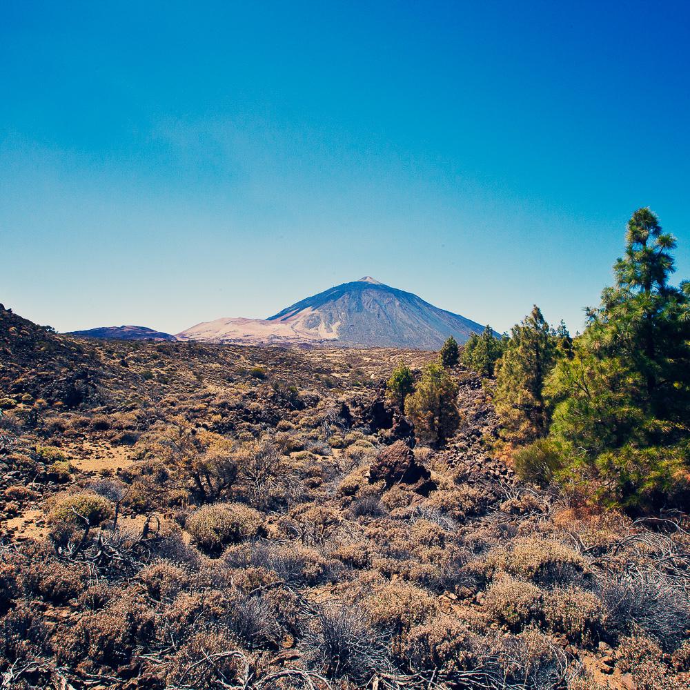 parque nacional del Teide_15 de septiembre_3778_media-7